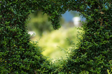 Cute heart cut into a hedge with a blurred background looking out at a backyard view.